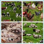 Farm Animals 2011