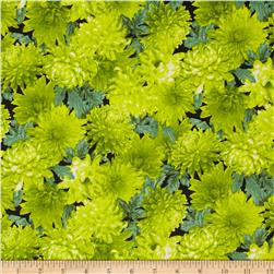 Fresh Market Chrysanthimum Green