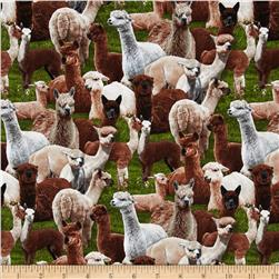 Farm Animals Alpaca Green