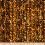 0283555 Nature Autumn Trees Fall Brown