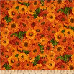 Fresh Market Daisy Orange