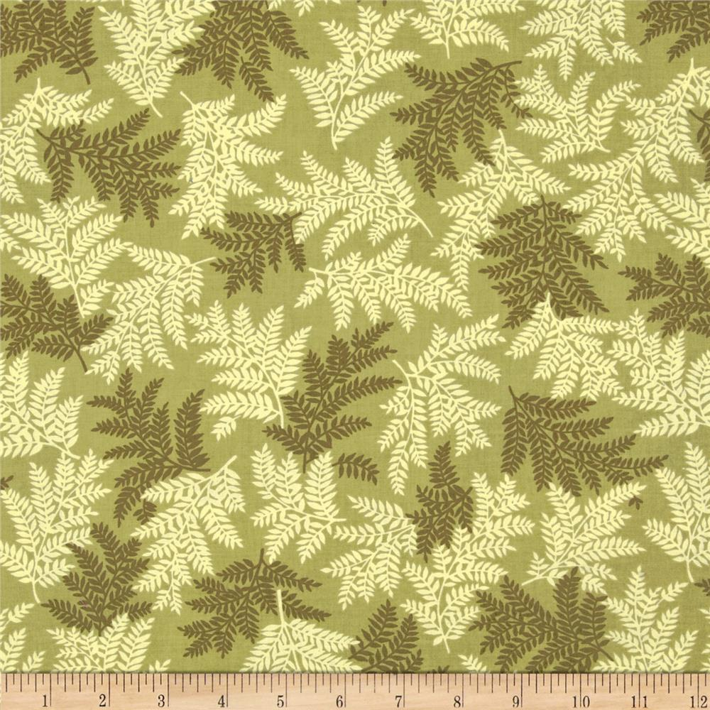 Mountain Majesty Fern Bronze Green