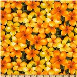 FV-254 State Flowers Hibiscus Yellow/Orange