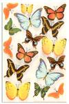Martha Stewart Crafts Butterfly Stickers