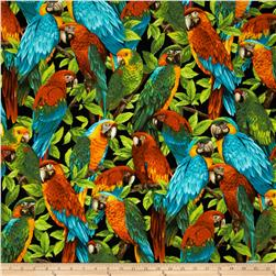 Wildlife Paradise Tropical Birds Black