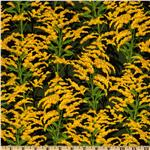 State Flowers Goldenrod Green/Yellow