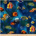 Island Sanctuary Sea Tropical Fish Cobalt