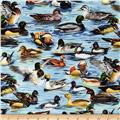 American Wildlife Ducks Multi