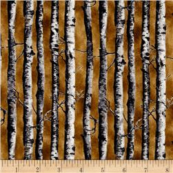 Northwoods Birch Gold