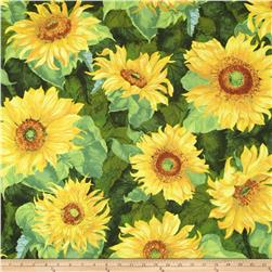 Slice of Sunshine Giant Sunflowers Dark Green