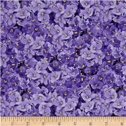 Shades of Violet Packed Violets Violet