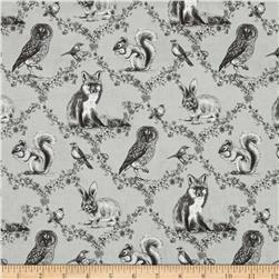 Woodland Forest Woodland Animals Grey
