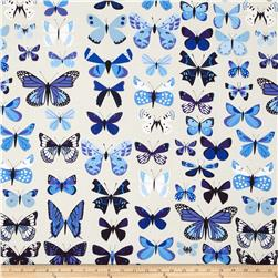Natural History Butterflies Blue
