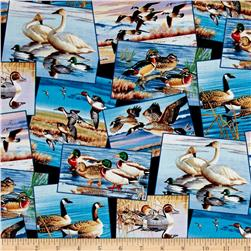 Waterfowl Postcards Black