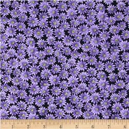 Poppy Panache Daisy Black/Purple