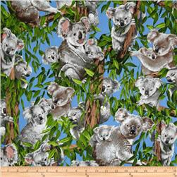 Koala Bears Allover Blue