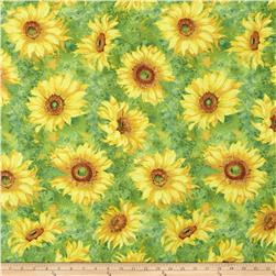 Slice of Sunshine Large Sunflowers Green