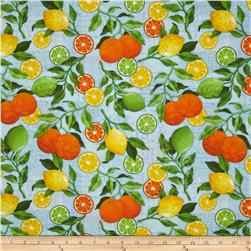 Citrus Grove Citrus All-Over