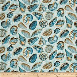 Natural World Sea Shells Tropical