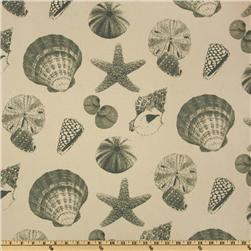 Premier Prints Shells Natural/Grey