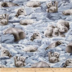 Nature Studies Arctic Animals Blue Glacier