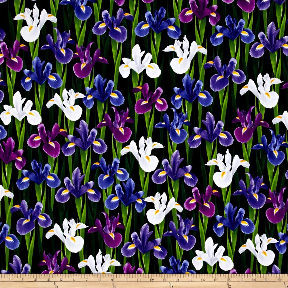 Kanvas Bloom With A View Iris Black/Purple