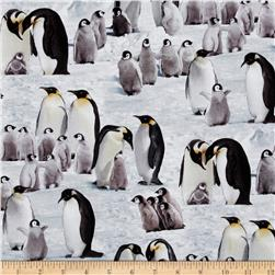 Emperor Penguins Snow