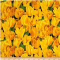 Fresh Market Tulip Yellow