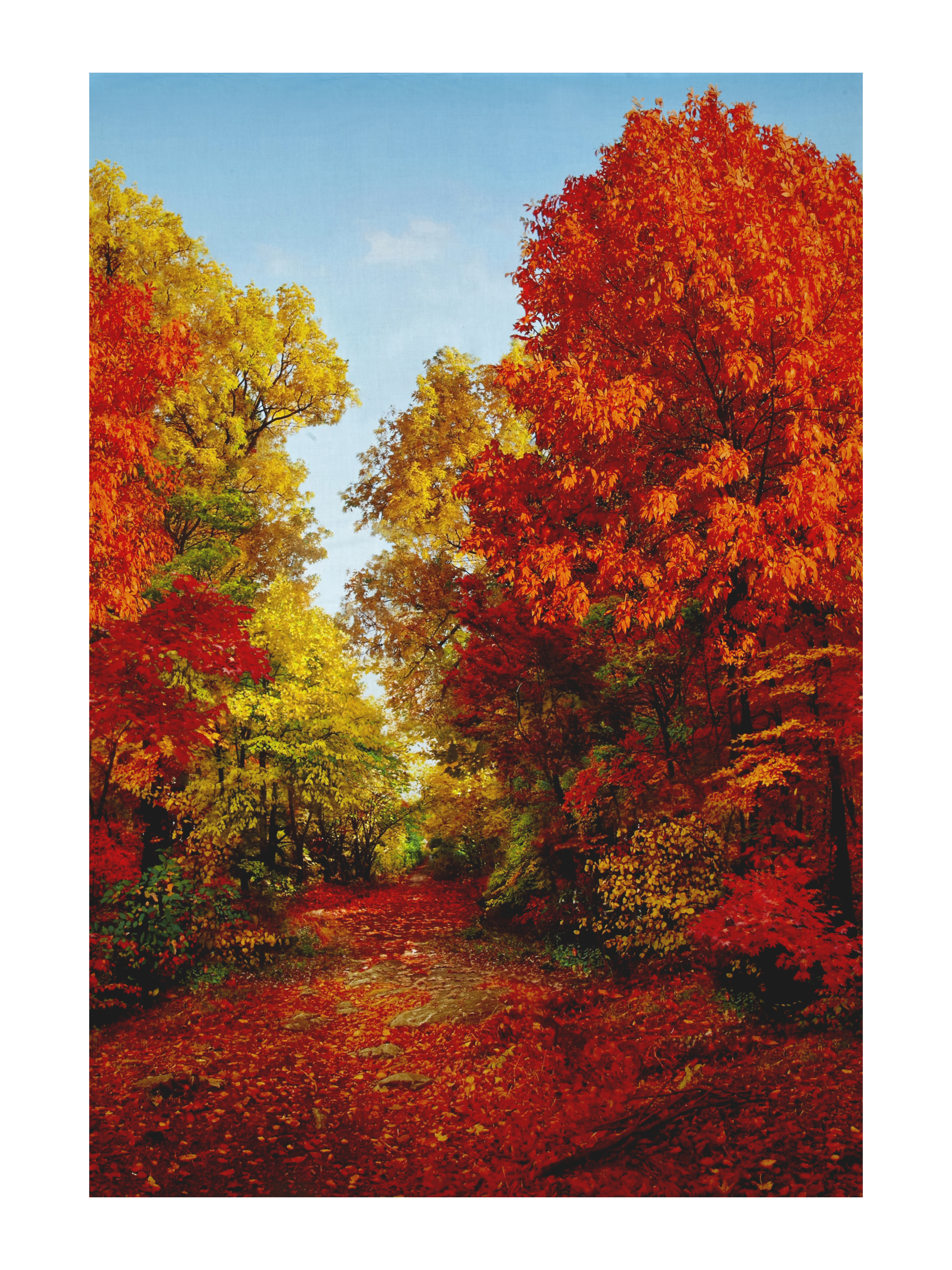 American Byways Digital Print Fall Scenic 30.5'' Panel Autumn Fabric by Hoffman of California in USA