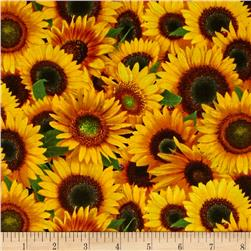 Sunflowers Packed Sunflowers Yellow