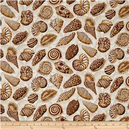 Natural World Sea Shells Natural
