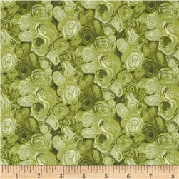Sea Turtles Turtle Skin Green