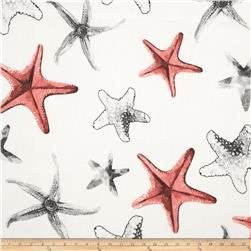 Largo Acrylic Indoor/Outdoor Starfish Slate