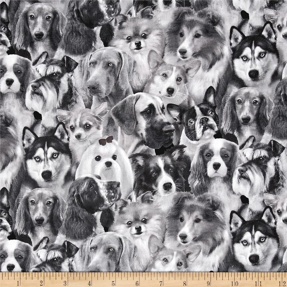 Dog Breeds Pack Dogs Gray