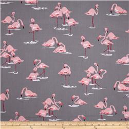 Flamingo Flamingo's Gray