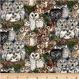 Owl Families Packed Owls Multi
