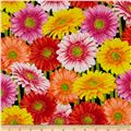 Kanvas New Bloom Gerber Daisy Black