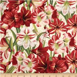 Making Spirits Bright Packed Amaryllis Ivory