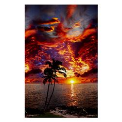 Hoffman Paradise Digital Print Ocean View Palm Pacific