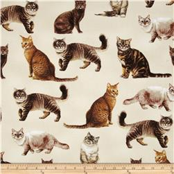 Timeless Treasures Cats Cream