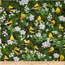 Timeless Treasures Birds Goldfinch Green