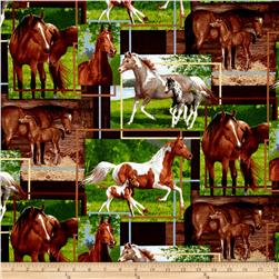 Animal Life Mares & Their Foals Multi