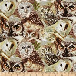 Owls of Wonder Packed Owls Multi