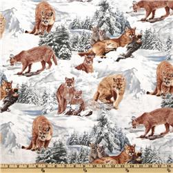 North American Wildlife Winter Mountain Lions White