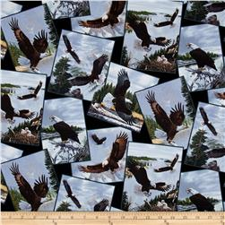 Majestic Bald Eagle Postcards Toss Black