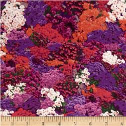 Fall Glory Packed Mums Multi