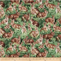 American Wildlife Rabbits Multi