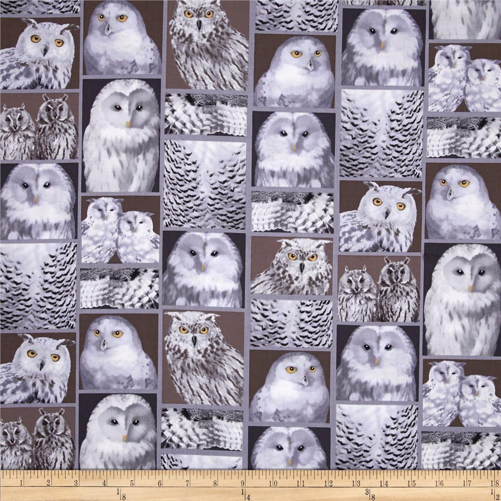 Kanvas The Great North Wilderness Feathered Owlet Silver