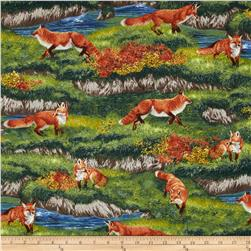Robert Kaufman Bringing Nature Home Foxes Nature