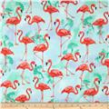 Kaufman Flamingo Paradise Flamingos Water